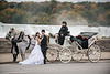 Weddings 2014 : 50 galleries with 14517 photos